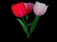3D Flowers Screensaver coupon