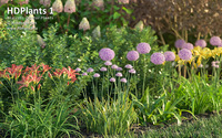 HDPlants 1 for 3ds MAX discount coupon