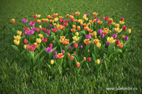HD Flowers 2 for 3ds Max coupon